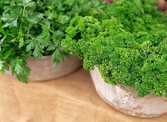 English and French Parsley